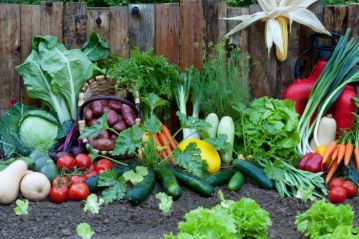 4-Financial-Reasons-to-Grow-Your-Own-Food